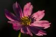 Kwiat | Flower