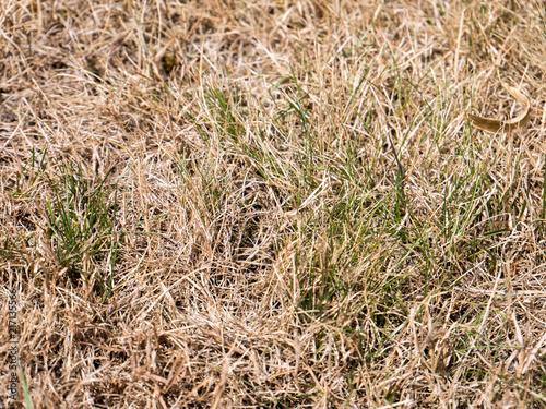 Fotografia, Obraz vertrockneter Rasen
