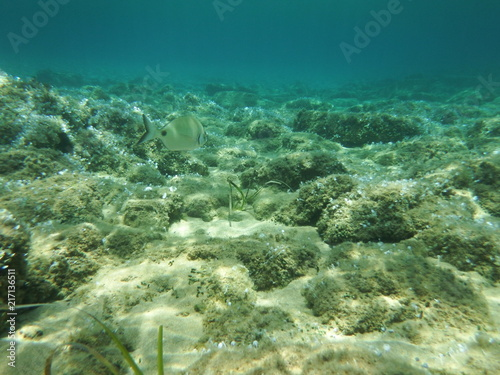 bajo el mar Wallpaper Mural