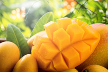 Fresh And Beautiful Mango Frui...