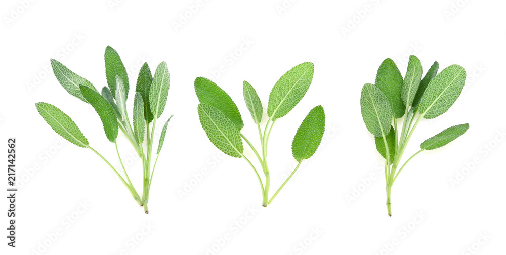 Fototapety, obrazy: Sage herb isolated on white background