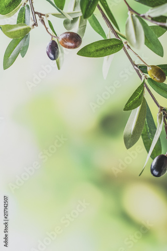 Fotobehang Olijfboom Green olive tree branch