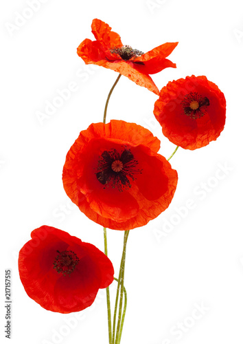 Foto op Aluminium Klaprozen Bouquet wild red poppy flower isolated on white background. Flat lay, top view