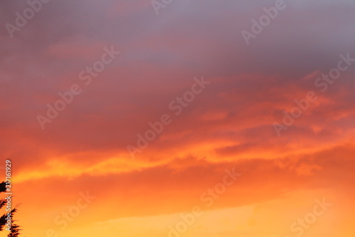 Fototapety, obrazy: deep red sunset skies above rees