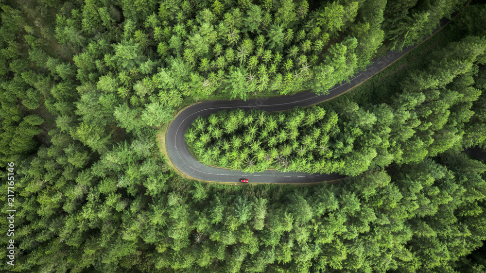 Fototapeta Aerial view of road in forest
