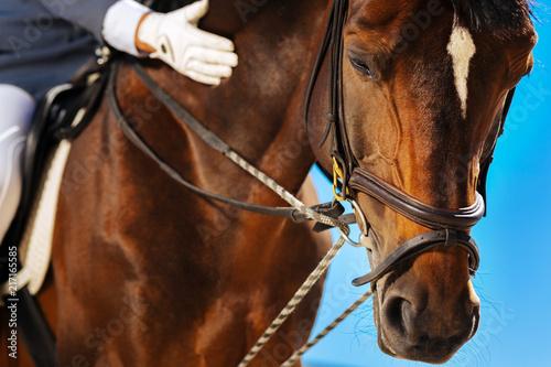 Tablou Canvas Annual horserace