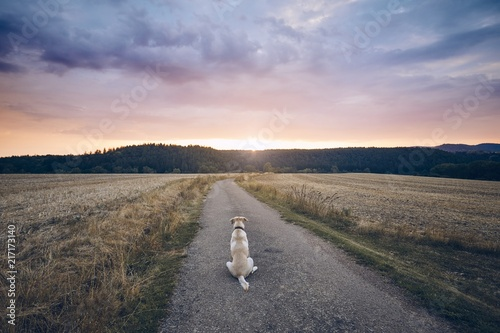 Fotografiet  Loyal dog waiting at sunset