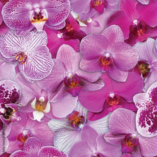 wzor-storczyki-bezszwowe-tlo-kwiat