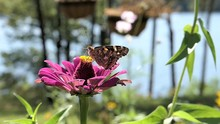 Butterfly Probes A Flower For ...
