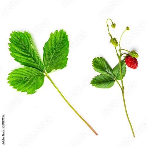 Top view of forest strawberry and leaf