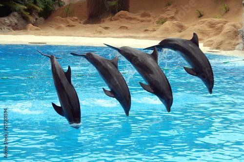 In de dag Dolfijn Delfin, Loro Park