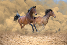 Two Bay Horses Run Fast From T...
