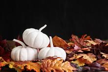 Fall Leaves And White Mini Pumpkins