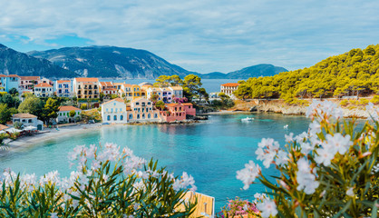 Panoramic view to Assos village in Kefalonia, Greece. Bright white blossom flower in foreground of turquoise colored calm bay of Mediterranean sea and beautiful colorful houses in background
