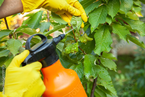 Photo Gardener applying from aphids leaves and insecticide fertilizer to fruit and pro