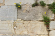 Muro de piedra con plantas