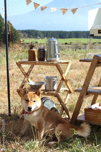Fotografie, Obraz  犬とキャンプ風景