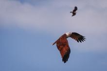 Eagles Flying Low