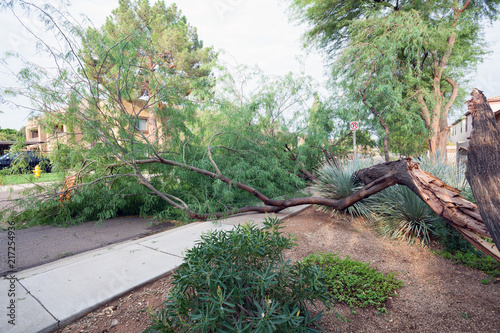 Printed kitchen splashbacks Khaki Residential street with a fallen old mesquite tree after annual summer monsoon storm in Phoenix, Arizona