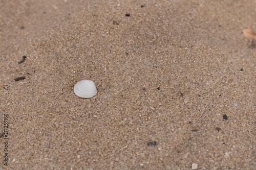 Photo sur Plexiglas Zen pierres a sable Look what the tide brings