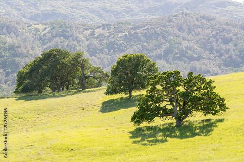 Fotobehang Zwavel geel Green trees on lush meadow