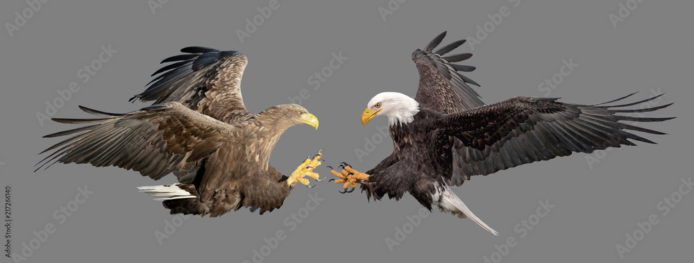 Fight of two eagles