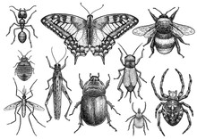Insect Collection Illustration...