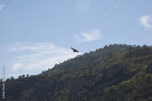 Poster Aigle Vulture 1