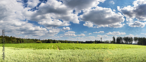 Fotobehang Donkergrijs Panorama of summer landscape with green fields and cloudy sky