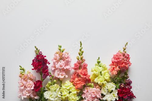 Fotografering beautiful fresh blooming decorative gladioli flowers on grey background