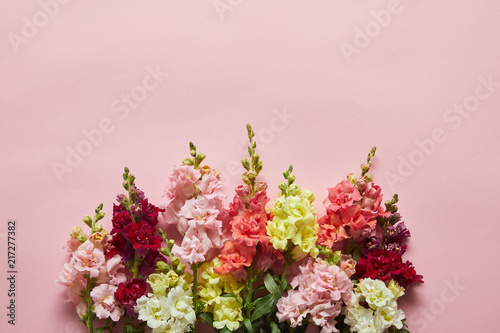 beautiful fresh blooming decorative gladioli flowers on pink background Canvas Print