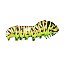 Illustration Caterpillar Water...