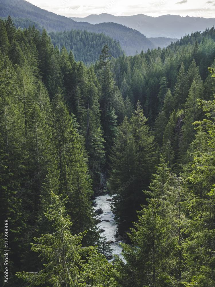 Fototapeta Washington Forest Valley River Landscape Portrait
