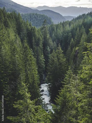 Leinwand Poster Washington Forest Valley River Landscape Portrait