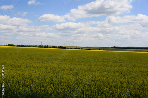 Deurstickers Platteland Beautiful landscape of agricultural fields of Russia. Rapeseed field in summer, Blooming canola flowers. Bright Yellow rapeseed oil. Flowering rapeseed.