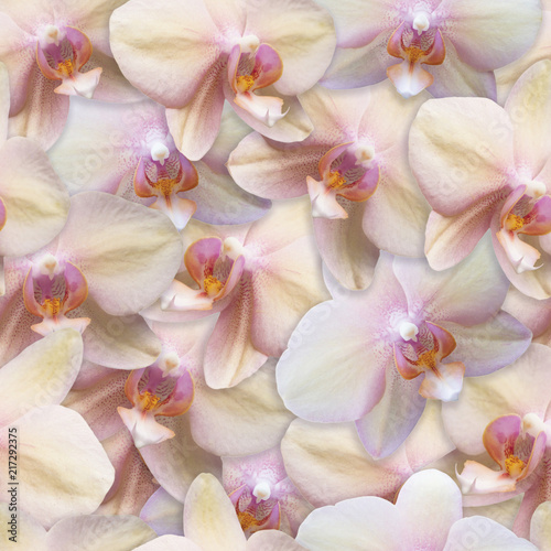 wzor-orchidee-bezszwowe-tlo-kwiat-perla-kolor
