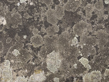 Stone Surface Overgrown With M...