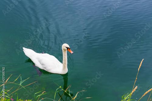 Staande foto Zwaan Swan swimming on the lake