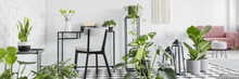 Many Fresh Green Plants Placed In White Open Space Room Interior In Real Photo With Chair By Metal Desk With Typewriter