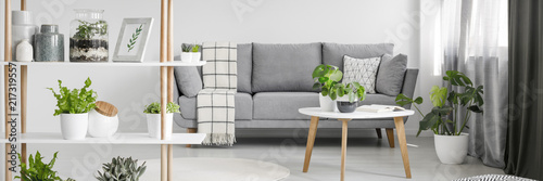 Photo  Nordic style sitting room interior in real photo with fresh plants, grey sofa wi