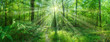 canvas print picture - Landschaft Panorama Laubwald Sonne strahlt zauberhaft durch Buchen - landscape panorama deciduous forest sun shines magically through beeches