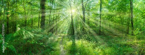 Landschaft Panorama Laubwald Sonne strahlt zauberhaft durch Buchen - landscape p Fototapeta