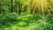 Landschaft zauberhafter Laubwald mit Fußweg im Frühling und Sonnenstrahlen - Landscape of enchanting deciduous forest with footpath in spring and sunshine