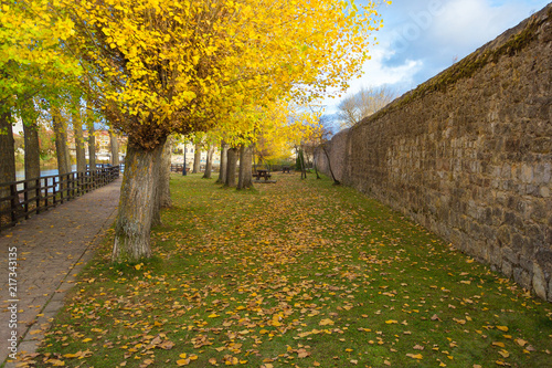 Autumn-Leaf Poster