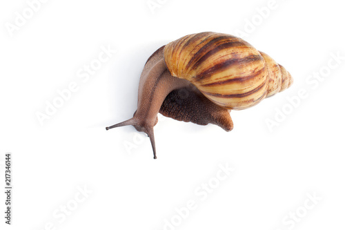 Snail for facial skin care on white background