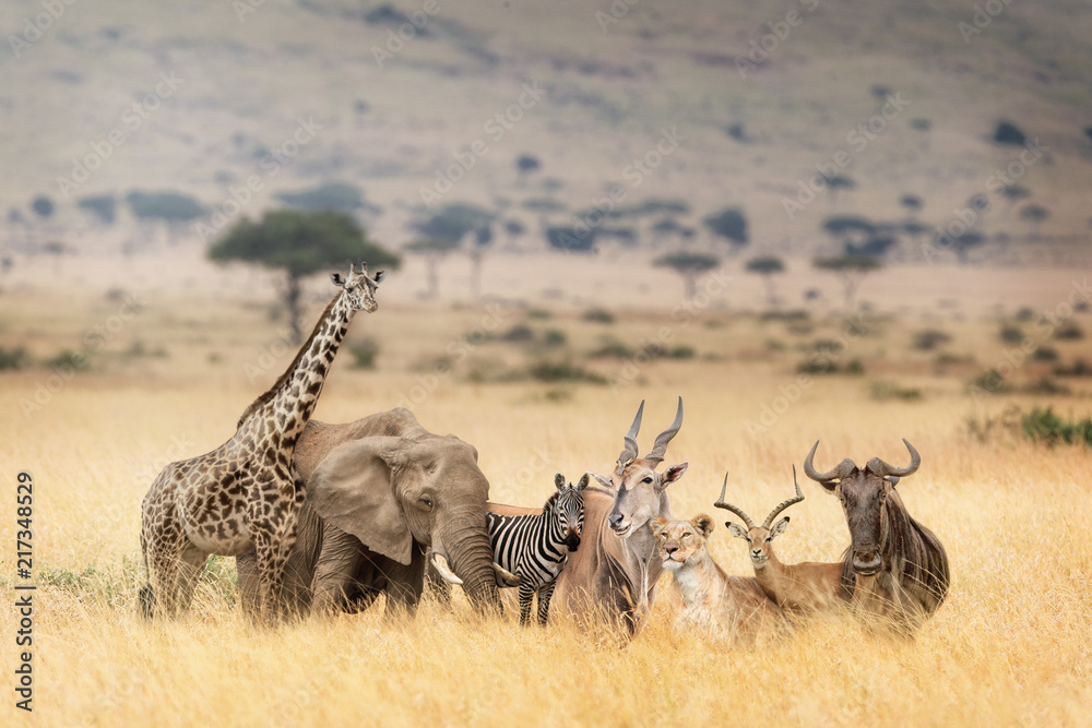 Fototapeta African Safari Animals in Dreamy Kenya Scene