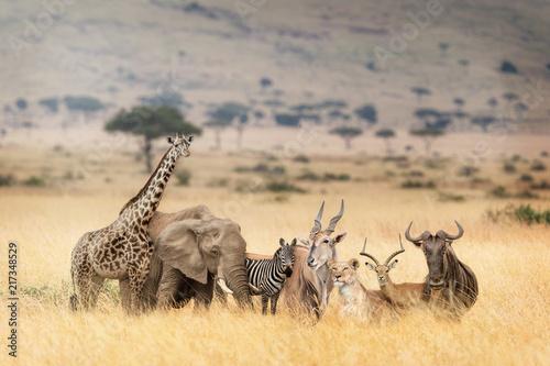 zwierzeta-afrykanskiego-safari