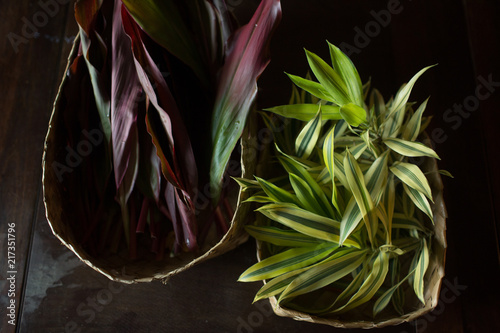 Foto op Canvas Planten Tropical plants in baskets