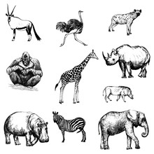 Set Of Hand Drawn Sketch Style African Animals Isolated On White Background. Vector Illustration.
