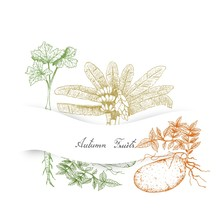 Hand Drawn Autumn Vegetables O...